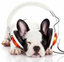 Как определить музыкальный слух. Как проверить музыкальный слух