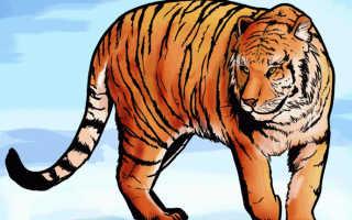 Как нарисовать голову тигра с открытой пастью. Учимся как нарисовать тигра