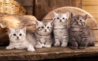 К чему снятся котята? Современный сонник. К чему снится что-то делать с ними