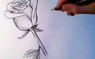 3д роза карандашом. Необходимые инструменты и материалы для рисования