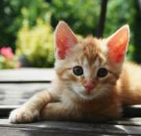 Имя для рыжего котенка: оригинальные и красивые имена, значение.