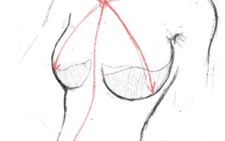 Анатомия аниме девушки для рисования. Анатомия человека в аниме