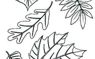 Раскраска кленовые листья распечатать. Раскраска осенние листья