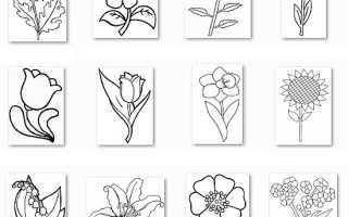 Раскраски на тему цветы распечатать.  Цветы из контурных линий