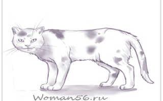 Рисуем кошек без проблем. Как нарисовать голову и уши кошки? Котенок в движении