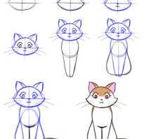Как нарисовать кошку которая. Как нарисовать кошку карандашом поэтапно