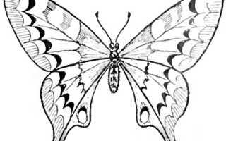 Красивые и легкие рисунки бабочек. Как разукрасить бабочку карандашами цветными