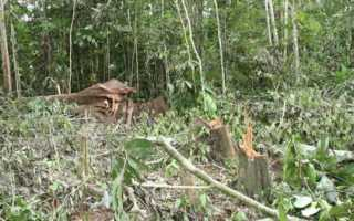 Дальше в лес больше дров значение пословицы. Дальше в лес больше дров значение