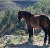 Анализ сказки коняга. Анализ сказки коняга салтыкова-щедрина сочинение