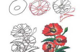 Как нарисовать цветок любой. Как рисовать цветы с детьми раннего возраста