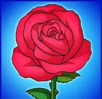 Букет из роз пошаговый рисунок. Как нарисовать красивую розу карандашом
