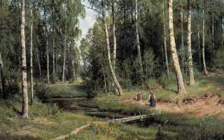 Характеристика картины утро в сосновом лесу. Утро в сосновом бору
