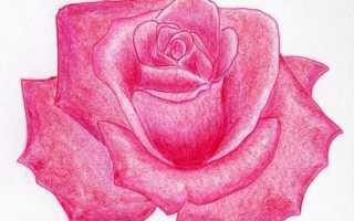 Пошаговый урок: как нарисовать розу. Как нарисовать изящный бутон розы
