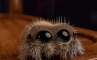 Что будет если убил паука. Почему нельзя убивать паука в доме? Народные приметы
