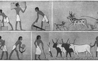 Проект как жили древние египтяне. Как жили земледельцы и ремесленники в египте