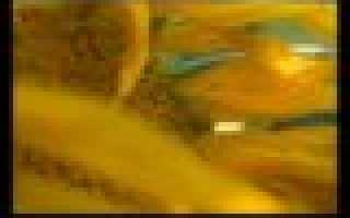 Сочинение на тему Изображение губительной власти денег в повести О. Бальзака «Гобсек