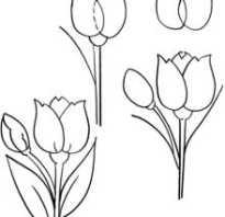 Как нарисовать тюльпаны. Инструкция для тех, кто только начинает рисовать