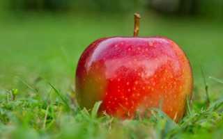 Антоновские яблоки части. Смысл произведения «Антоновские яблоки