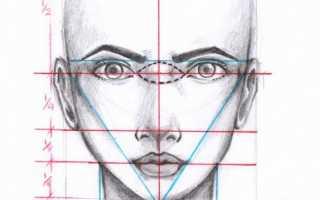 Лицо девушки боком карандашом. Как нарисовать лицо: основы и пропорции