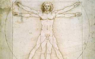 Значит да винчи. Леонардо да Винчи и его знаменитый витрувианский «Человек в круге