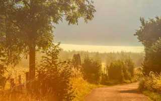 Пейзаж в асе. Роль пейзажной зарисовки в повести И.С.Тургенева `Ася`