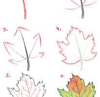 Как красиво рисовать листья. Как нарисовать листья карандашом поэтапно