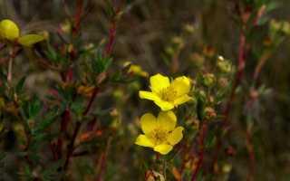 Тема произведения платонова неизвестный цветок. Сочинение «Анализ сказки-были А