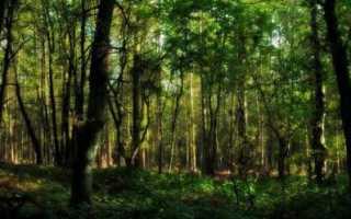 Поговорка чем дальше в лес тем больше. Дальше в лес больше дров значение