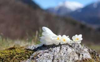 Сообщение отношение печорина к женщине. Сочинения по русскому языку и литературе