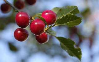 Отношение героев к вишневому саду. Характеристика героев пьесы «Вишневый сад